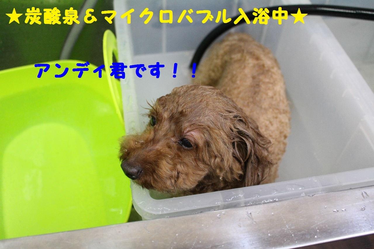 尊敬しちゃう~!!_b0130018_08045684.jpg