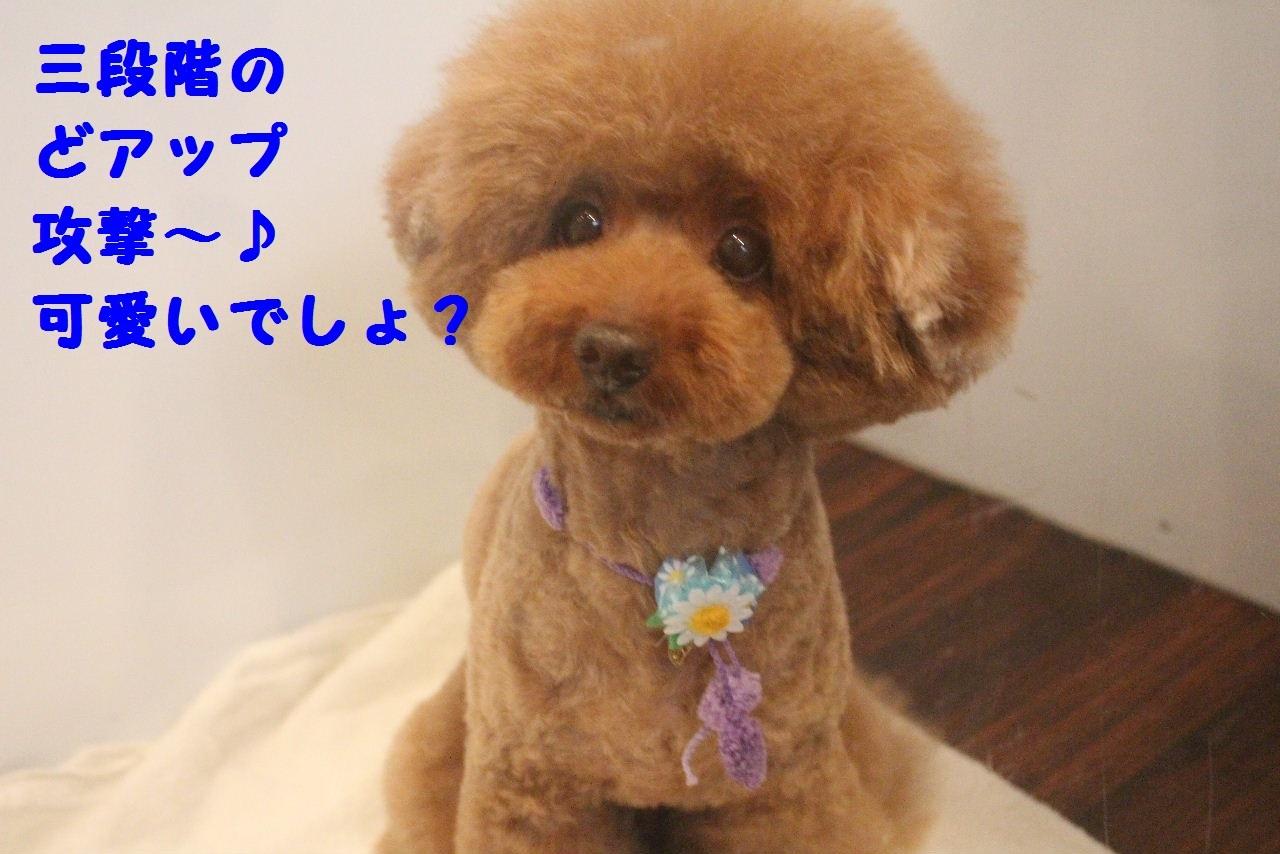 尊敬しちゃう~!!_b0130018_08053829.jpg
