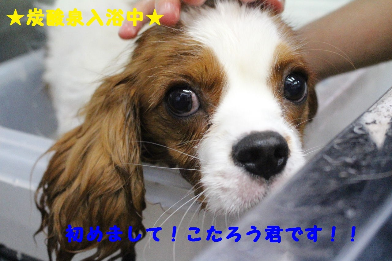 尊敬しちゃう~!!_b0130018_08070830.jpg