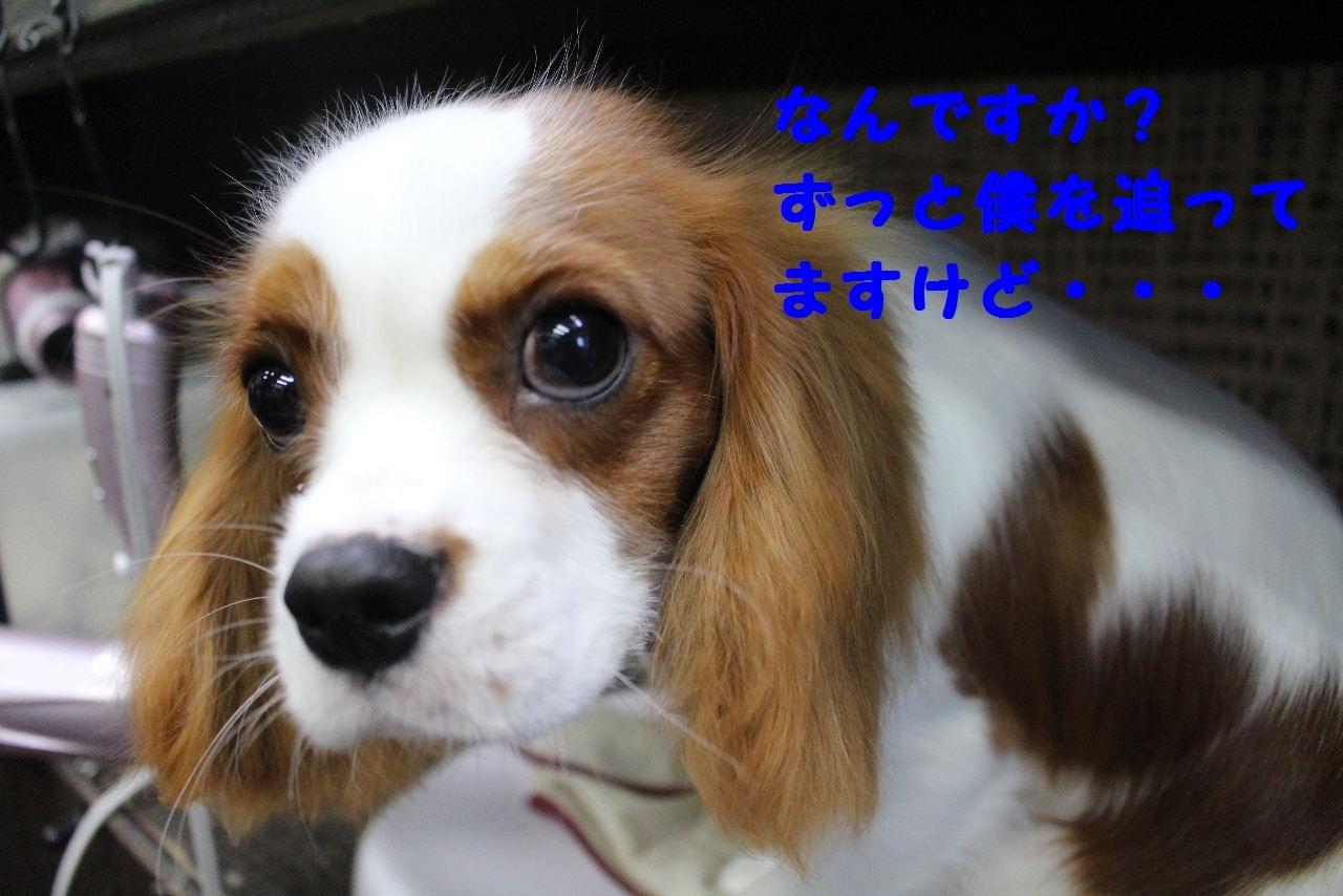 尊敬しちゃう~!!_b0130018_08073030.jpg
