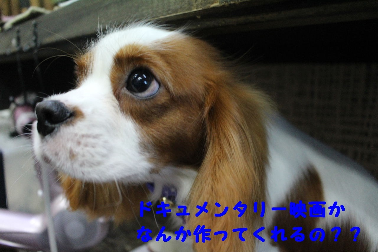 尊敬しちゃう~!!_b0130018_08073773.jpg