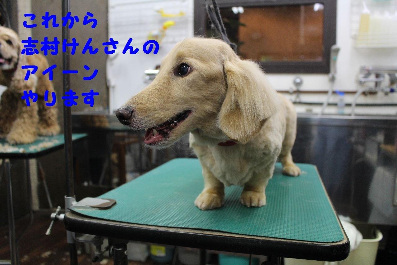 尊敬しちゃう~!!_b0130018_08094667.jpg