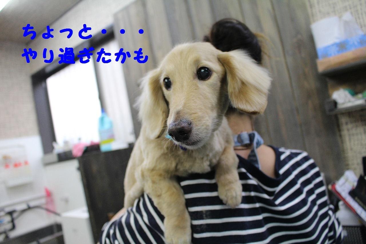 尊敬しちゃう~!!_b0130018_08100753.jpg