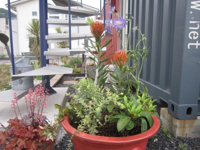"""寄せ植えしてみました。\""""Garden Flow"""" 事務所内にて。_e0361918_15123484.jpg"""