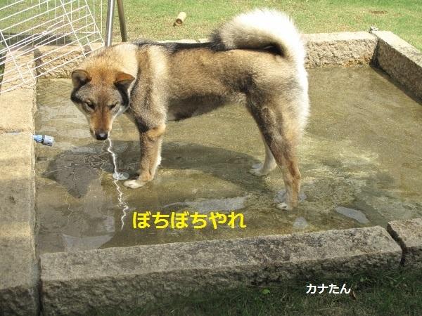 f0143123_10162011.jpg