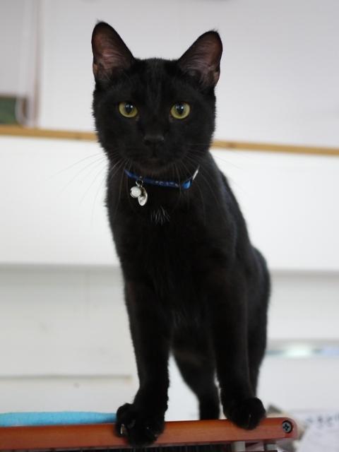 猫のお留守番 ルパンくん編。_a0143140_20341700.jpg