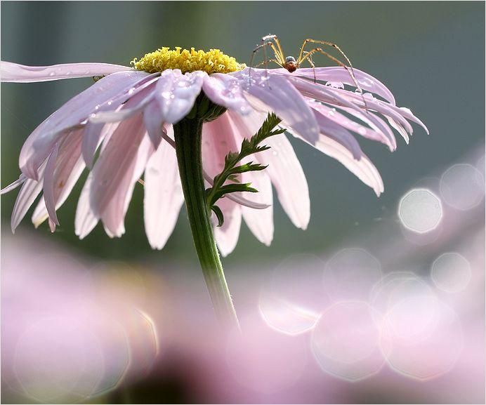 庭の花_a0256349_16542231.jpg