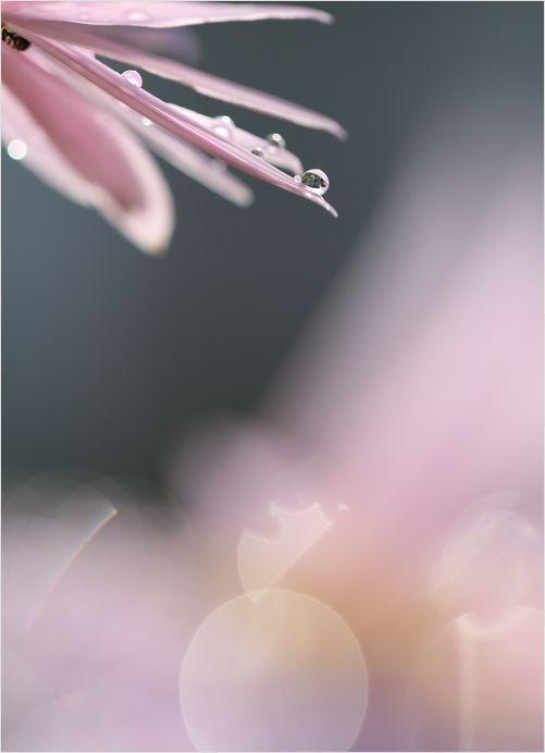 庭の花_a0256349_16544946.jpg