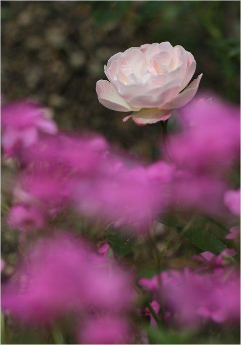 庭の花_a0256349_16575497.jpg