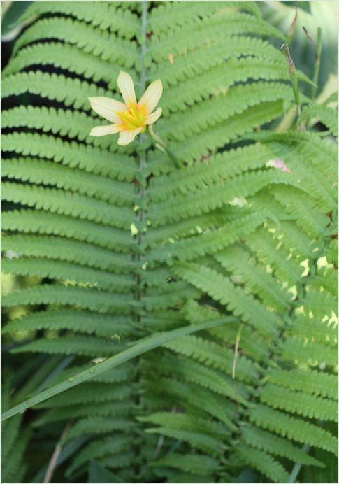 庭の花_a0256349_16581445.jpg