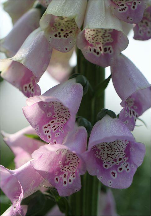庭の花_a0256349_1658450.jpg