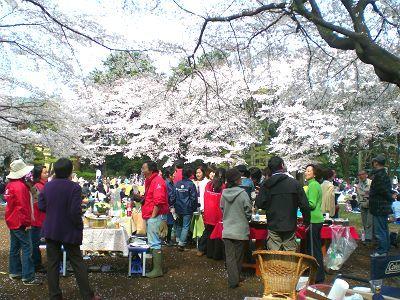 2017年4月2w 満開の櫻の下で「雑草除去」_a0094959_13533854.jpg