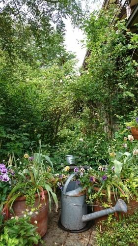 秘密の花園。_d0362666_12200847.jpg