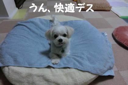 b0193480_15485346.jpg