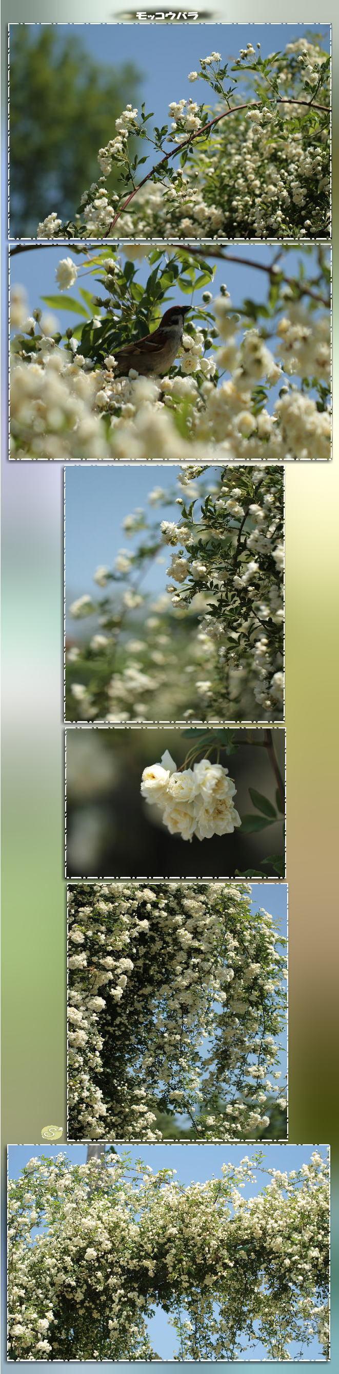 f0164592_10065802.jpg
