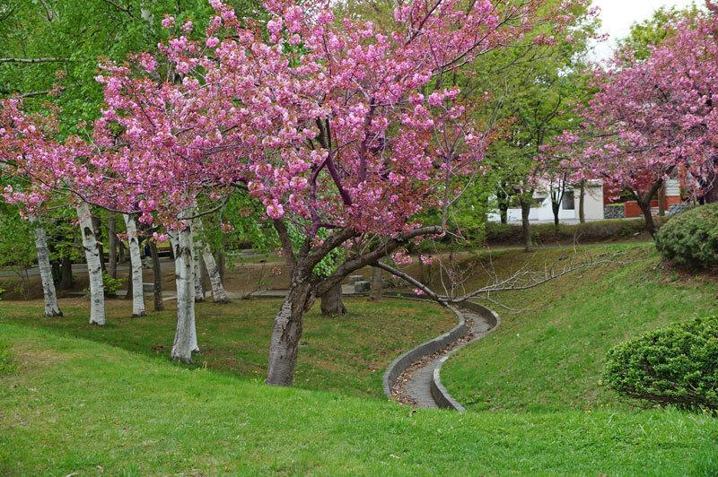 八重桜_d0162994_12564863.jpg