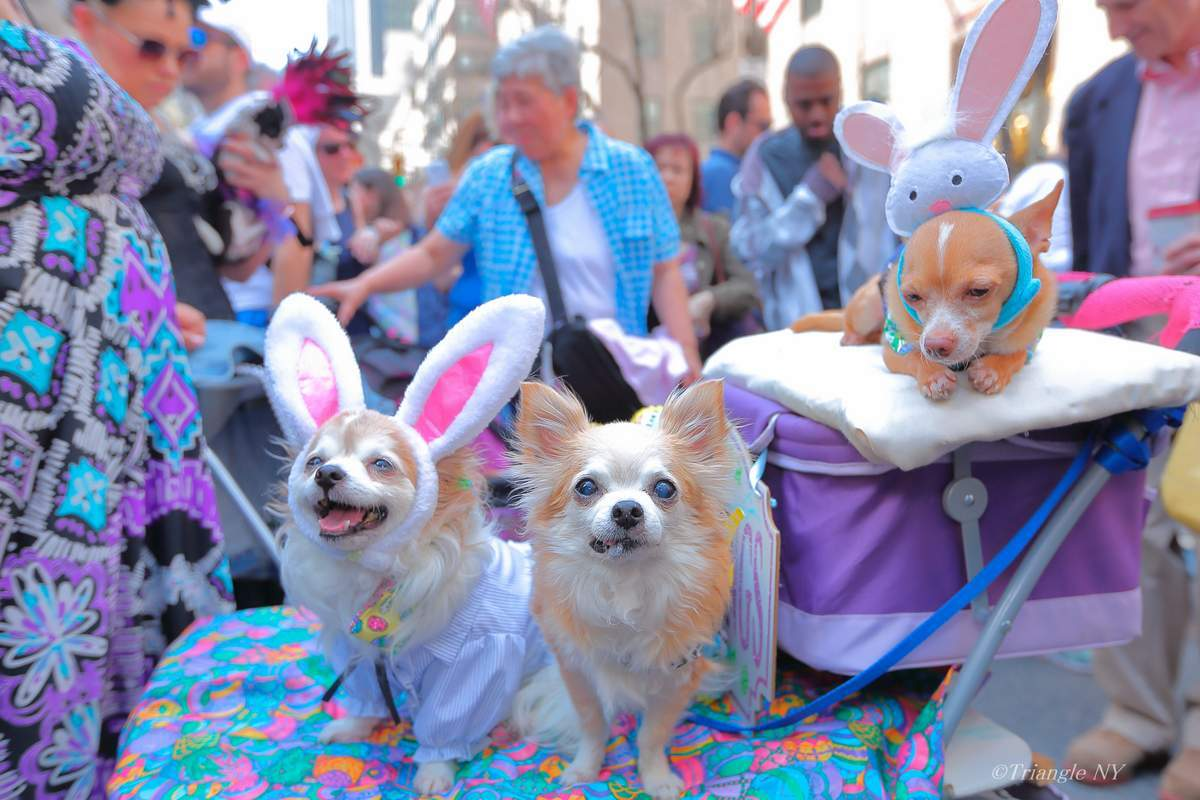 5th Avenue Easter Parade 2017 ④_a0274805_22041046.jpg