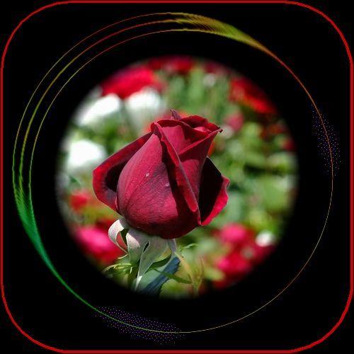 f0132006_08360432.jpg