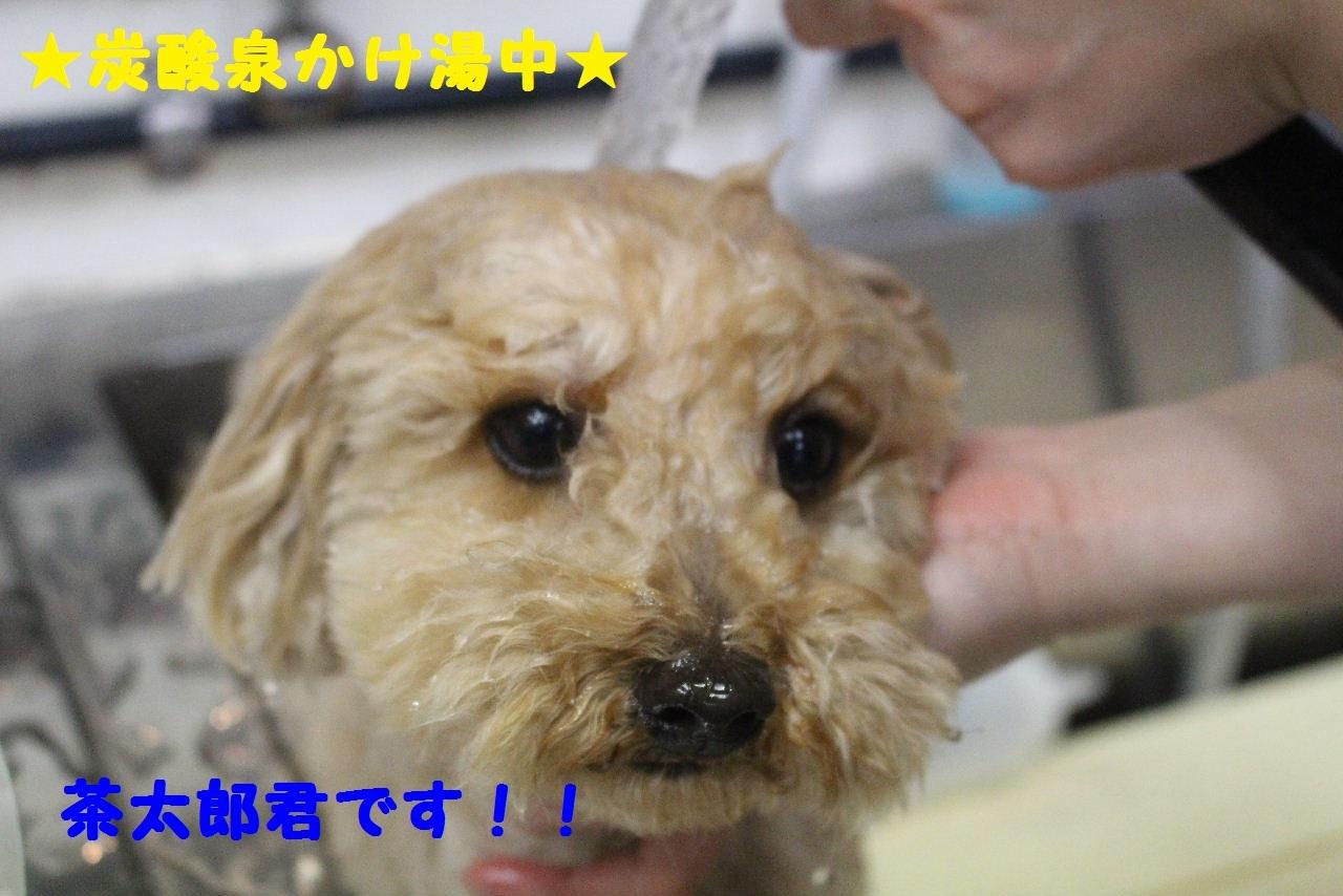尊敬しちゃう~!!_b0130018_08003581.jpg