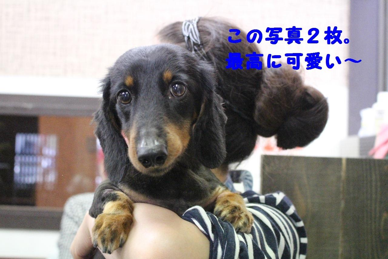 尊敬しちゃう~!!_b0130018_08024671.jpg