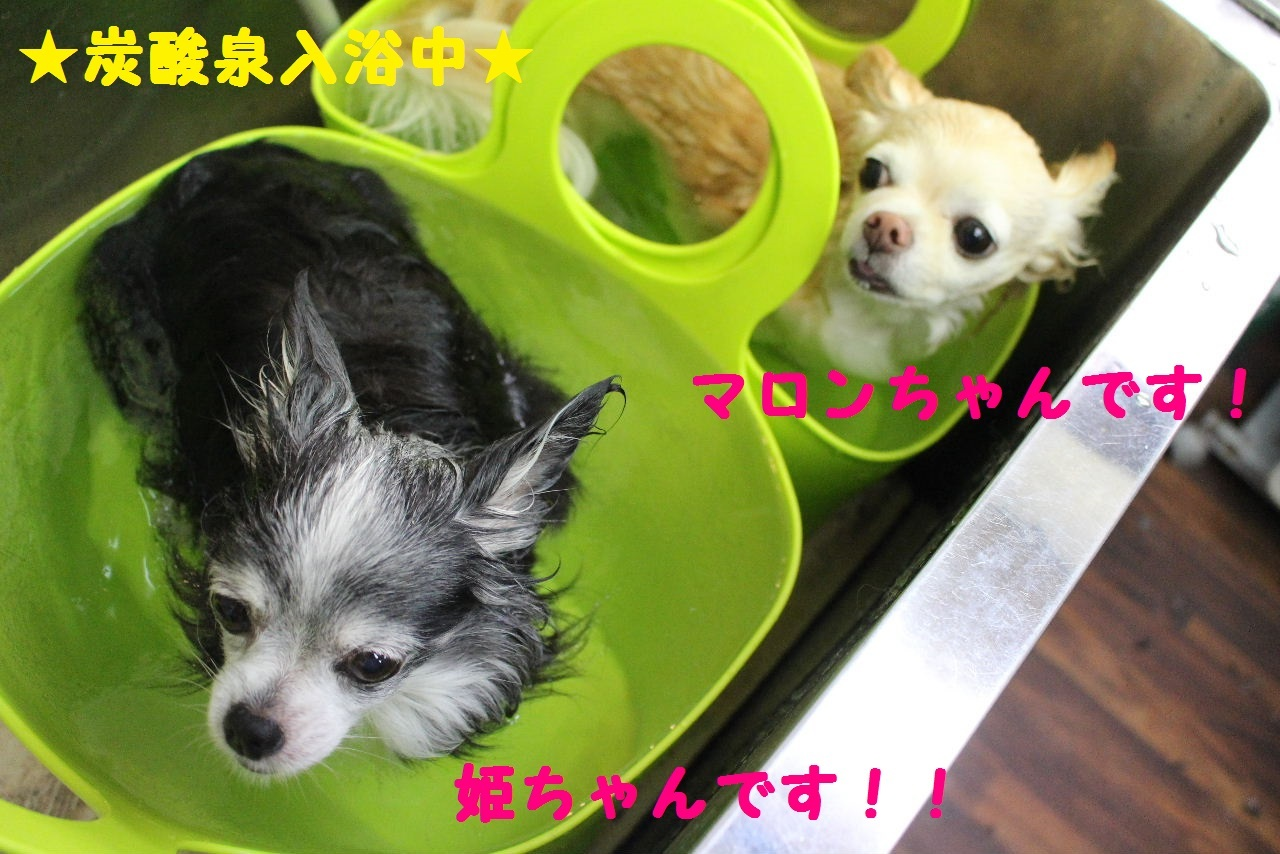 尊敬しちゃう~!!_b0130018_08034890.jpg