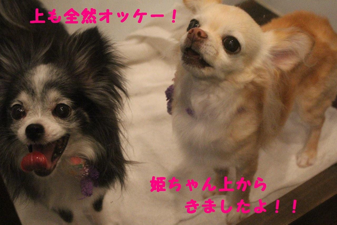 尊敬しちゃう~!!_b0130018_08042609.jpg