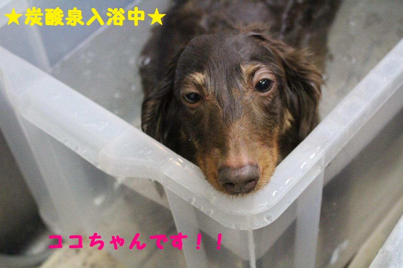 尊敬しちゃう~!!_b0130018_08054593.jpg