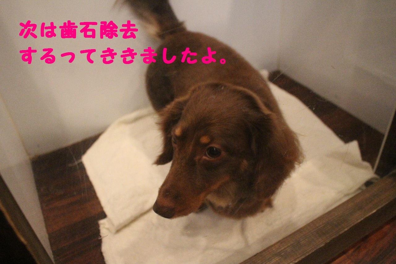 尊敬しちゃう~!!_b0130018_08060710.jpg