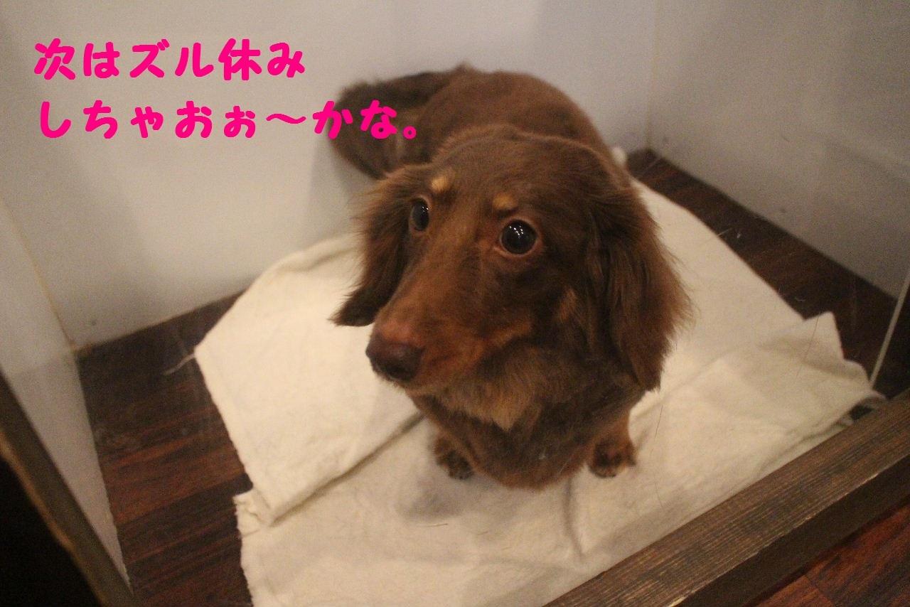 尊敬しちゃう~!!_b0130018_08062368.jpg