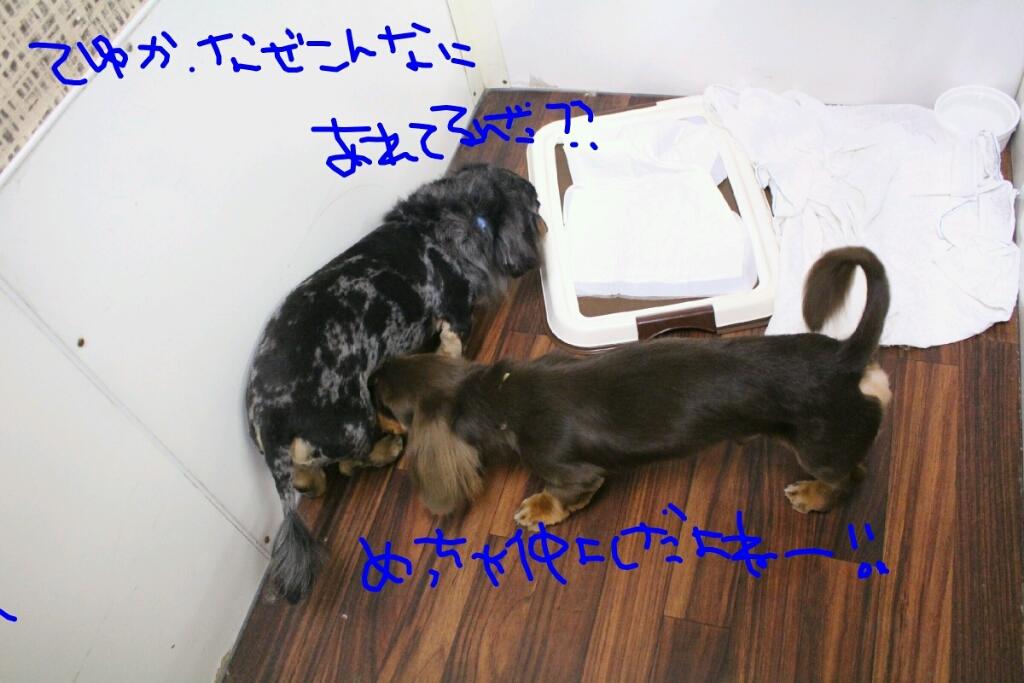 b0130018_19221448.jpg