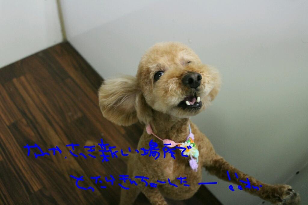 b0130018_19344573.jpg