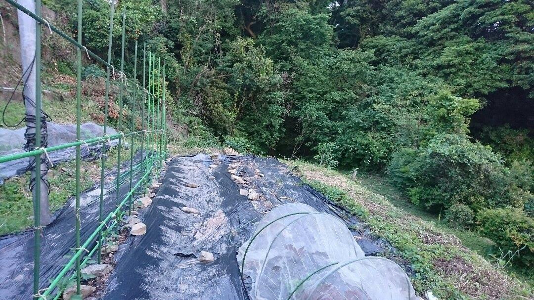 野いちごジャム作り、有機醤油入荷&今朝の畑。_a0125419_11231132.jpg