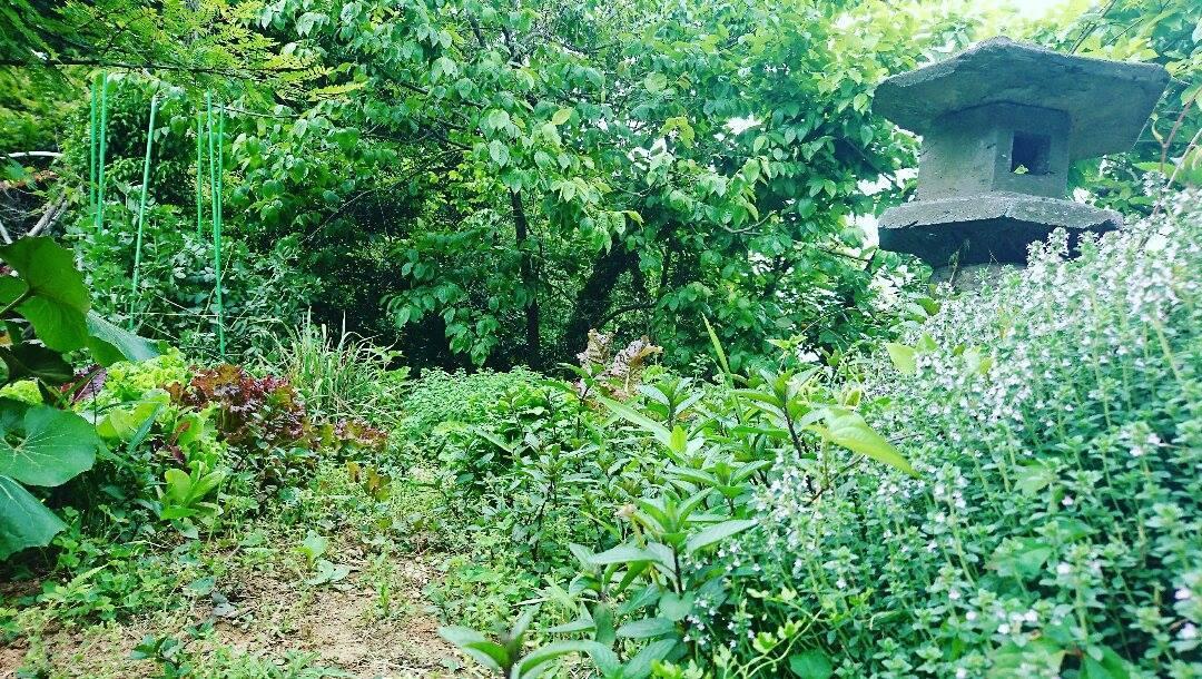 野いちごジャム作り、有機醤油入荷&今朝の畑。_a0125419_11572981.jpg