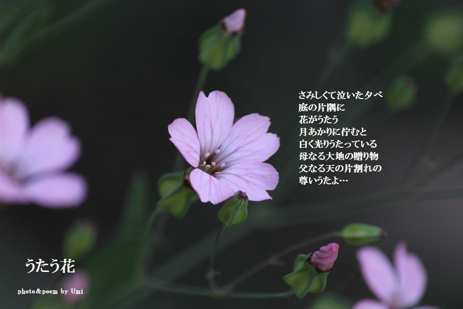 f0351844_16411923.jpg