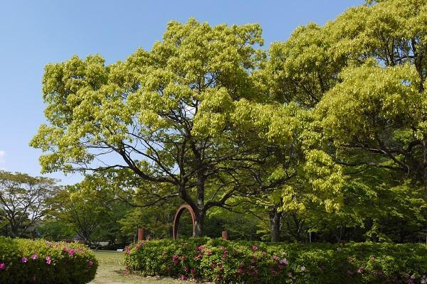 大池公園 散歩_a0098746_11575498.jpg