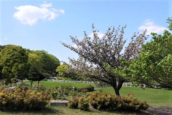 大池公園 散歩_a0098746_1158282.jpg