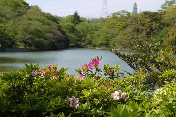 大池公園 散歩_a0098746_11592524.jpg