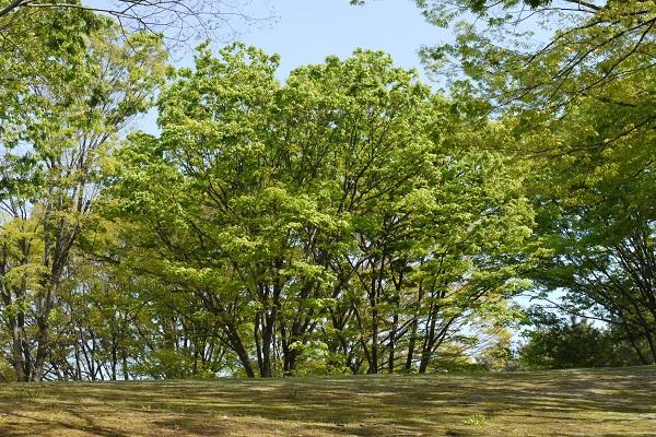 大池公園 散歩_a0098746_1159394.jpg