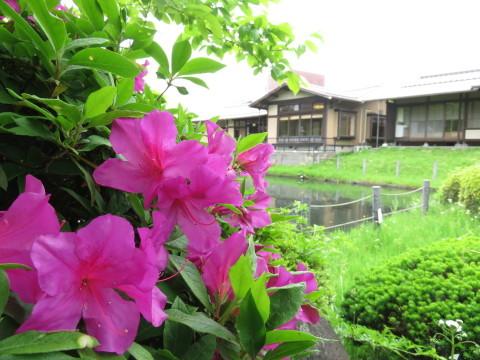 初夏ですね(*´ω`*)_a0217348_12481519.jpg