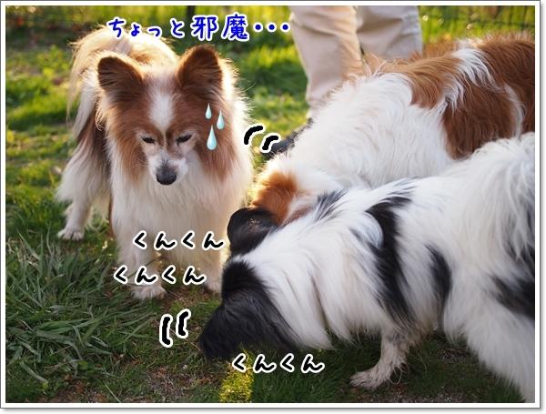 d0013149_00221181.jpg