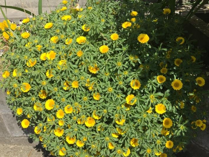 お花の季節♪_b0115751_22530683.jpg