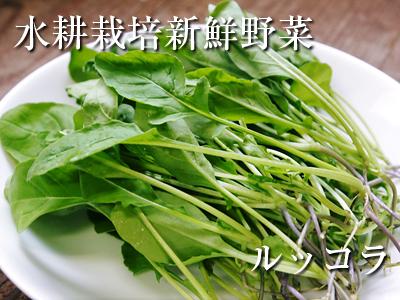 水耕栽培の朝採り新鮮野菜 フレッシュバジルの販売に向けて!_a0254656_17253561.jpg