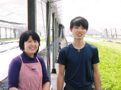 水耕栽培の朝採り新鮮野菜 フレッシュバジルの販売に向けて!_a0254656_17470562.jpg