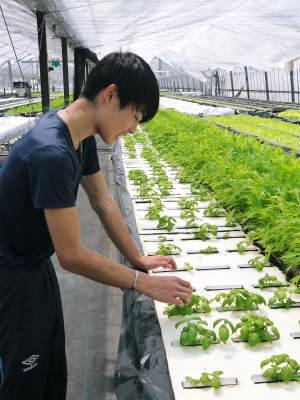 水耕栽培の朝採り新鮮野菜 フレッシュバジルの販売に向けて!_a0254656_17505091.jpg