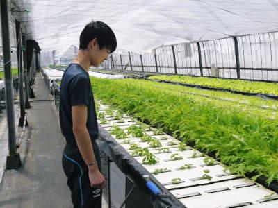 水耕栽培の朝採り新鮮野菜 フレッシュバジルの販売に向けて!_a0254656_18284369.jpg