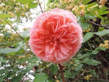 次に咲くのは_e0099359_10484453.jpg
