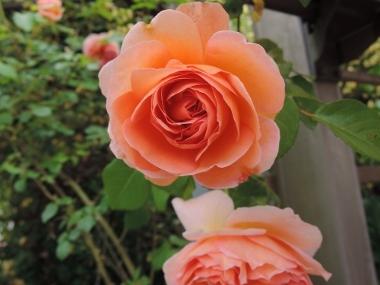 次に咲くのは_e0099359_10485988.jpg