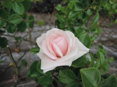 次に咲くのは_e0099359_10491701.jpg