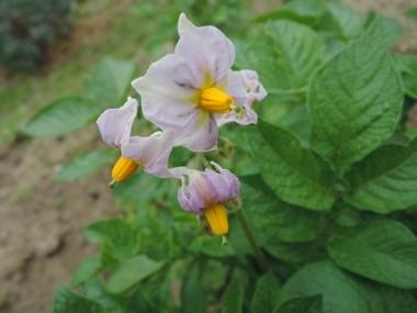 次に咲くのは_e0099359_10494171.jpg