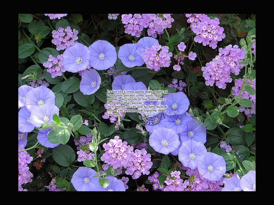 f0198771_00000196.jpg
